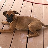 Adopt A Pet :: Otis - New Oxford, PA