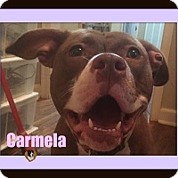 Adopt A Pet :: Carmela-Foster Home Needed - Memphis, TN