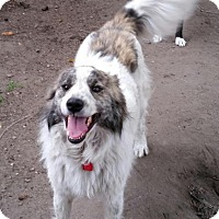 Adopt A Pet :: Oreo - Saskatoon, SK