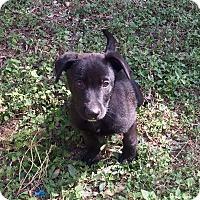 Adopt A Pet :: Franklin - San Antonio, TX