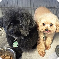 Adopt A Pet :: Anna (And Honey) - Rancho Cucamonga, CA