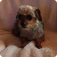 Adopt A Pet :: Pickle - Plainfield, CT