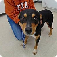 Adopt A Pet :: Dusty - Littleton, CO