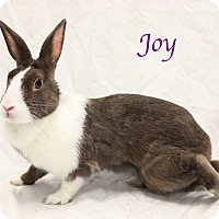 Adopt A Pet :: Joy - Bradenton, FL