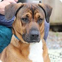 Adopt A Pet :: Karmel    Great Girl!!!   Lower Fee! - Locust Fork, AL
