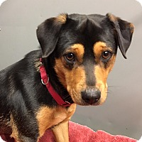 Adopt A Pet :: Thelma - Big Canoe, GA