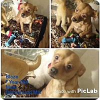 Adopt A Pet :: Blaze - Big Spring, TX