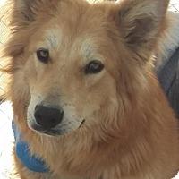 Adopt A Pet :: Sadie - Las Vegas, NV