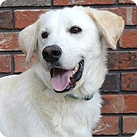 Adopt A Pet :: *Marley - PENDING - Westport, CT