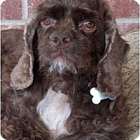 Adopt A Pet :: Breeleigh - Sugarland, TX