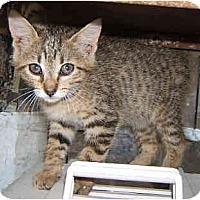 Adopt A Pet :: Peppermint - Dallas, TX