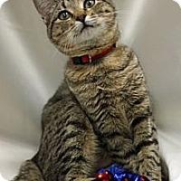 Adopt A Pet :: Bonnie - Alexandria, VA