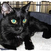 Adopt A Pet :: Onyx - Catasauqua, PA