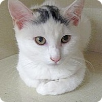 Adopt A Pet :: Angel - Riverhead, NY