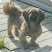 Adopt A Pet :: Bear - Homer Glen, IL