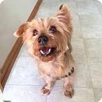 Adopt A Pet :: Peanut - Milwaukee, WI