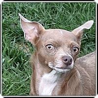 Adopt A Pet :: Sophie - Nine Mile Falls, WA