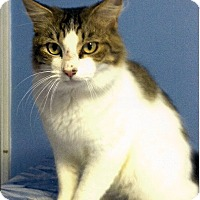 Adopt A Pet :: Franklin - Medway, MA