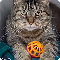 Adopt A Pet :: Bernadette - Merrifield, VA
