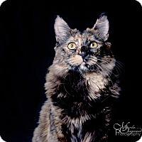 Adopt A Pet :: Larkin - Chino Hills, CA