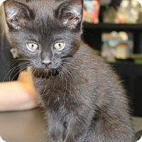 Adopt A Pet :: Coconut - Hamilton, ON
