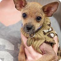 Adopt A Pet :: Phoenix - Huntsville, AL