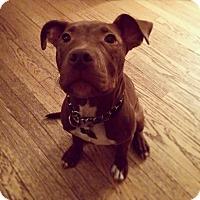 Adopt A Pet :: Meatball - Baltimore, MD