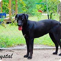 Adopt A Pet :: Crystal - Daleville, AL