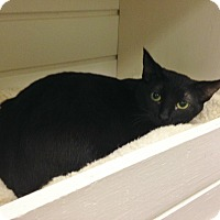 Adopt A Pet :: Gummy Bear - Byron Center, MI