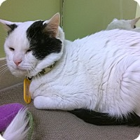 Adopt A Pet :: Klinger - The Colony, TX