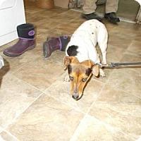 Adopt A Pet :: Vela - Lewisburg, TN