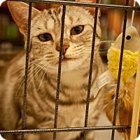 Adopt A Pet :: Heather - Los Angeles, CA
