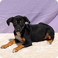 Adopt A Pet :: Gabriela - East Sparta, OH