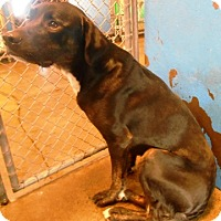 Adopt A Pet :: Devon - Redding, CA