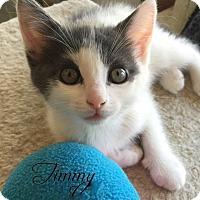 Adopt A Pet :: Timmy - Island Park, NY