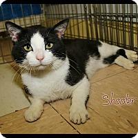 Adopt A Pet :: Shooter - Shippenville, PA