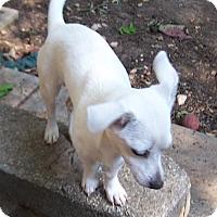 Adopt A Pet :: BG (Baby Girl) - Greensboro, GA
