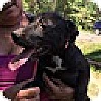 Adopt A Pet :: Moonbeam (POM-dc) - Washington, DC
