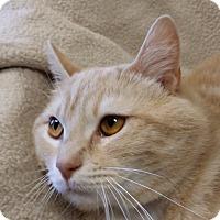 Adopt A Pet :: Latte - Berlin, CT