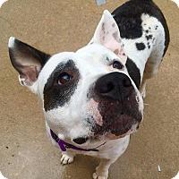 Adopt A Pet :: Wednesday - Wichita, KS