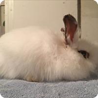 Adopt A Pet :: Landis - Bonita, CA