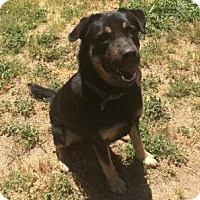 Adopt A Pet :: Bear - Gridley, CA