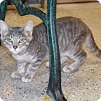 Adopt A Pet :: Roy - Michigan City, IN