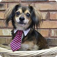 Adopt A Pet :: Cruze - Benbrook, TX