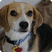 Adopt A Pet :: Ella - Mansfield, TX