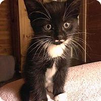 Adopt A Pet :: Phoebe - Bold Girl! - Huntsville, ON