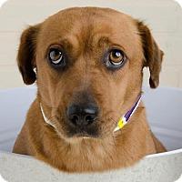 Adopt A Pet :: Claire - Denver, CO