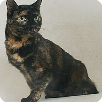 Adopt A Pet :: Emmy Lou - Redding, CA