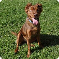 Adopt A Pet :: FLETCHER - Naples, FL