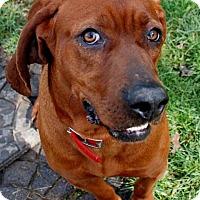 Adopt A Pet :: Oliver - Salem, WV